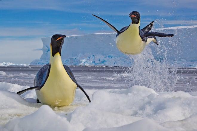 Emperor Penguins shot from the Mario Zuchelli Base, Ross Sea, Antarctica. (Photo by Paul Nicklen)